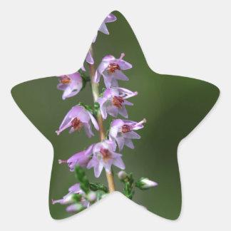 Gemeenschappelijke Heide (vulgaris Calluna) Ster Sticker