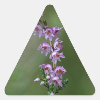 Gemeenschappelijke Heide (vulgaris Calluna) Stickers