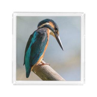 Gemeenschappelijke Ijsvogel Acryl Dienblad