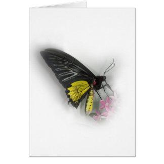 Gemeenschappelijke vlinder Birdwing Briefkaarten 0