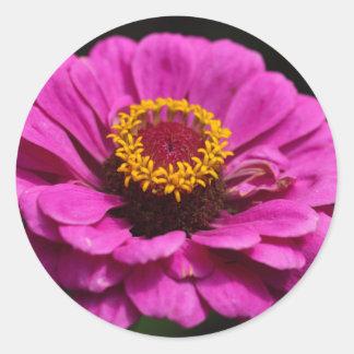 Gemeenschappelijke Zinnia (Zinnia elegans) Ronde Sticker
