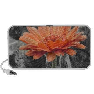 Gerber Daisy Color Splash Country Cute iPod Speaker