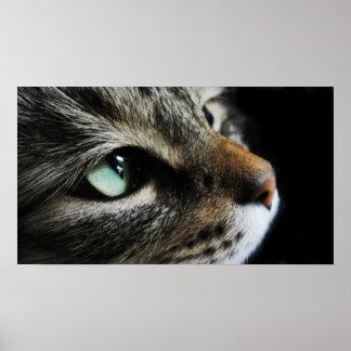 Gestreepte kat poster