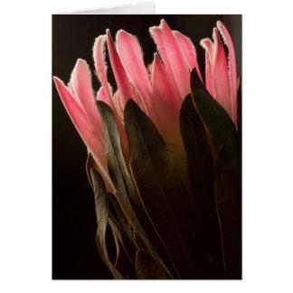 Gewaagde Roze Tropische Bloem Protea Kaart
