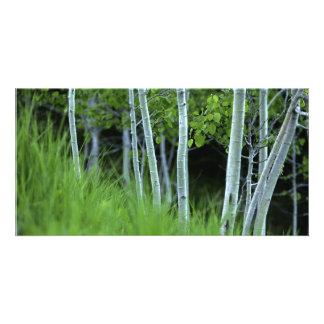 Ghosttrees Kaart