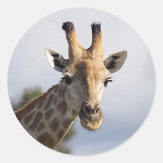 Giraf in Botswana, Afrika, Sticker