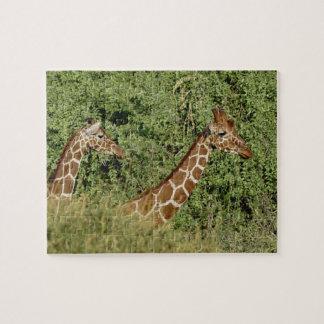 Giraffen met een netvormig patroon, camelopardalis puzzel