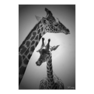 giraffen, moeder en kind poster