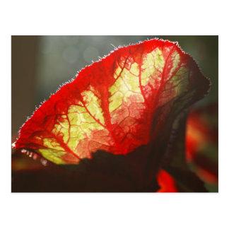Glanzend rood blad briefkaart