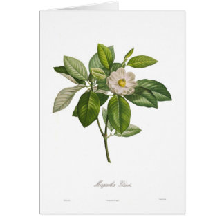 Glauca van de magnolia kaart