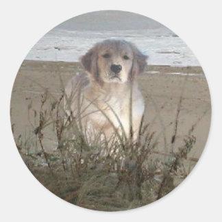 Golden retriever op de Sticker van het Strand