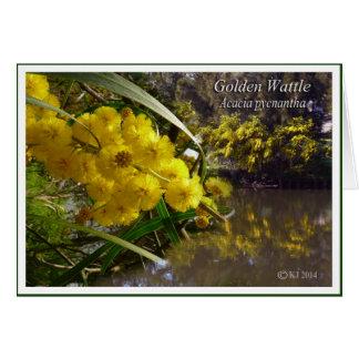 Gouden Acacia - pycnantha van de Acacia Kaart