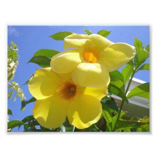 Gouden Bloemen I van de Trompet Foto Afdrukken