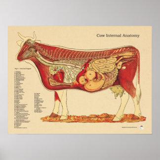 Grafiek van de Anatomie van de koe de Runder Poster
