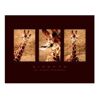 Grappige Giraf Briefkaart