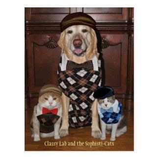 Grappige Hond/Laboratorium & Katten in Sweaters Briefkaart