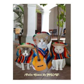 Grappige Katten Feliz Cinco DE Mayo Briefkaart