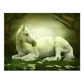Grijs Arabisch Paard Briefkaart