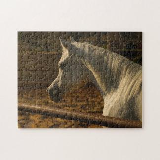 Grijs Arabisch Paard Legpuzzel