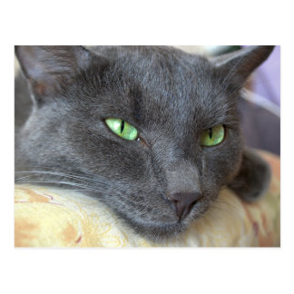 Grijs kattenbriefkaart briefkaart