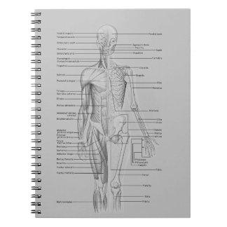 Grijze Anatomie Ringband Notitieboek