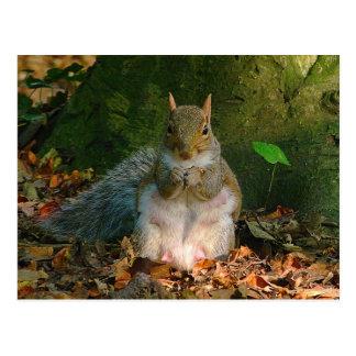 Grijze Eekhoorn - Bute Park, Cardiff, Wales, het Briefkaart