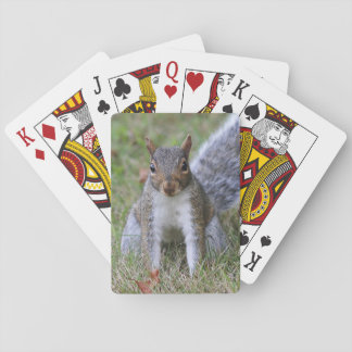 Grijze Eekhoorn Speelkaarten