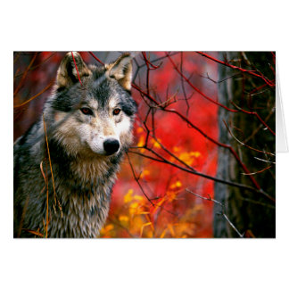 Grijze Wolf in Mooi Rood en Geel Gebladerte Notitiekaart