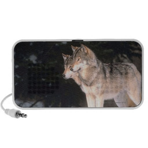 Grijze wolven laptop speaker