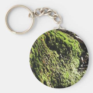 Groen mos in natuurDetail van mos behandelde Sleutelhanger