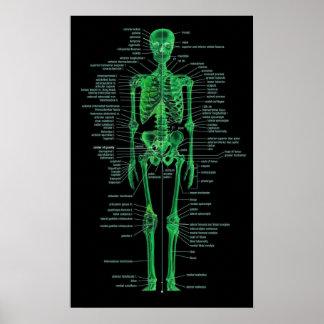 groen skelet poster