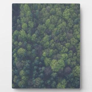 Groene Bomen Fotoplaat