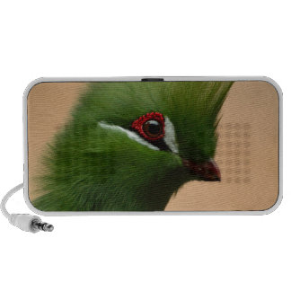 Groene Exotische Vogel