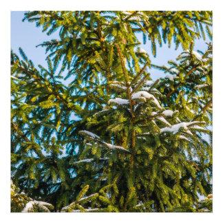 Groene Kerstboom in Sneeuw Foto Afdrukken
