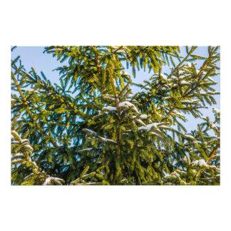 Groene Kerstboom in Sneeuw Foto Print