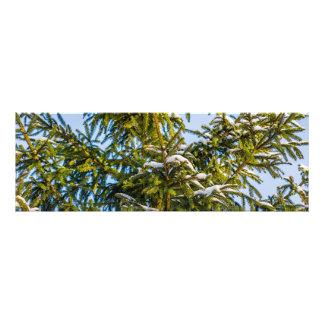Groene Kerstboom in Sneeuw Fotografische Afdruk