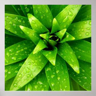 groene macro poster