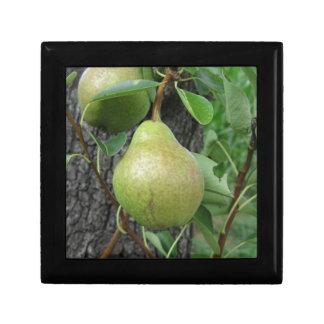 Groene peren die op een het groeien perenboom decoratiedoosje