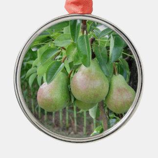 Groene peren die op een het groeien perenboom zilverkleurig rond ornament