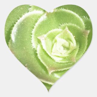 Groene succulent hart sticker