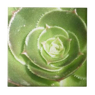 Groene succulent keramisch tegeltje