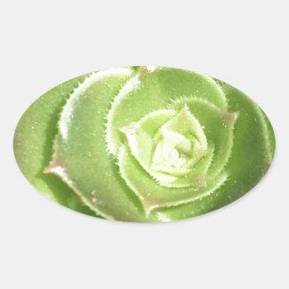 Groene succulent ovale sticker