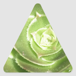 Groene succulent stickers