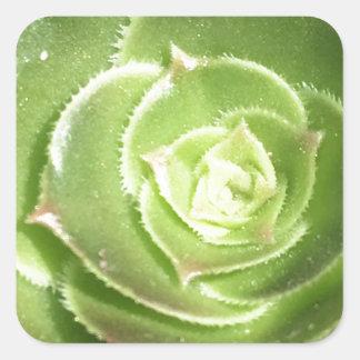 Groene succulent vierkante sticker