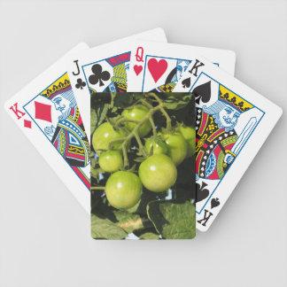 Groene tomaten die op het plant in de tuin hangen pak kaarten
