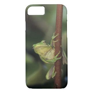 Groene Treefrog, cinerea Hyla, volwassen op geel iPhone 7 Hoesje