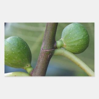 Groene vruchten van een gemeenschappelijke rechthoekige sticker