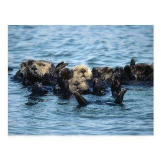 Groep de Otters van het Zee Briefkaart