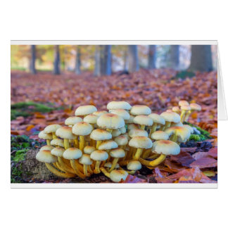 Groep paddestoelen in het bos van de herfstbeuk briefkaarten 0