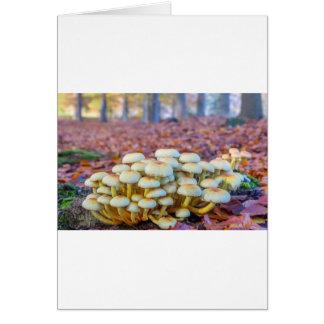Groep paddestoelen in het bos van de herfstbeuk kaart
